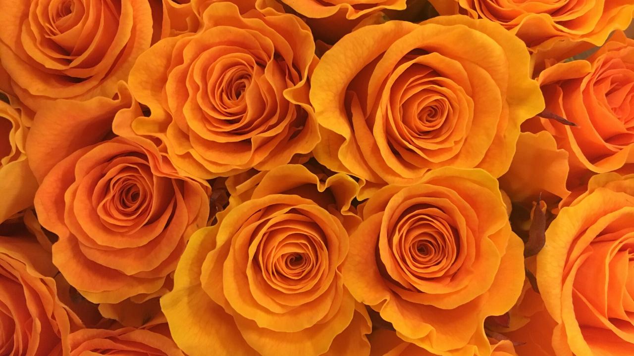 スターダムの木村花選手が亡くなったという公式発表に絶句...